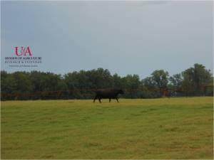 Pasture, Center Pivot Irrigation