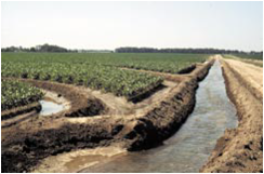 Levee irrigation in a soybean field