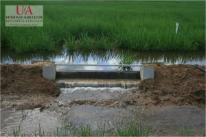 Weir in flooded rice field